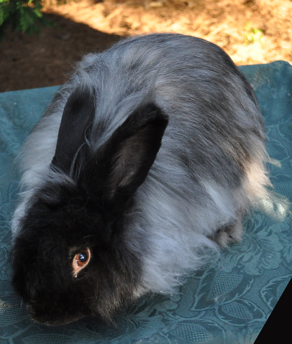 """angora black single men Because of this, some black men believe that women of other races maintain a more light, airy """"fun girl"""" approach to love in their adult years, which they ultimately find more attractive."""